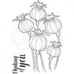 Woodware Clear Stamp Set Poppy Heads